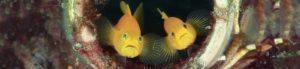 Amazing lembeh | Amazing Dive