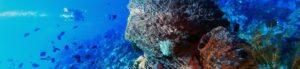 Amazing manado | Amazing Dive